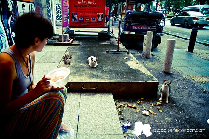 gatos_tailandeses_algo_que_recordar_01