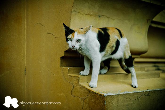 gatos_tailandeses_algo_que_recordar_02