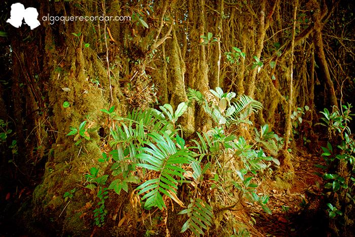 cameron_highlands_malasia_algo_que_recordar_05