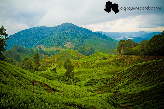 cameron_highlands_malasia_algo_que_recordar_01
