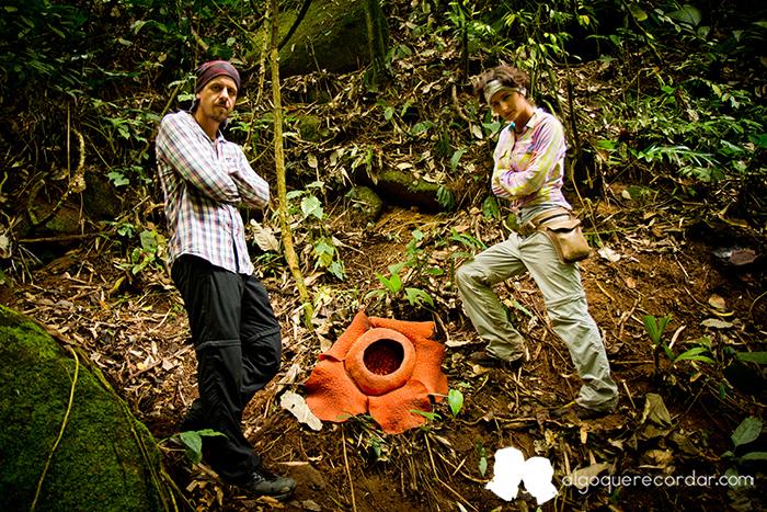 Rafflesia_Malasia_desafio_algo_que_recordar