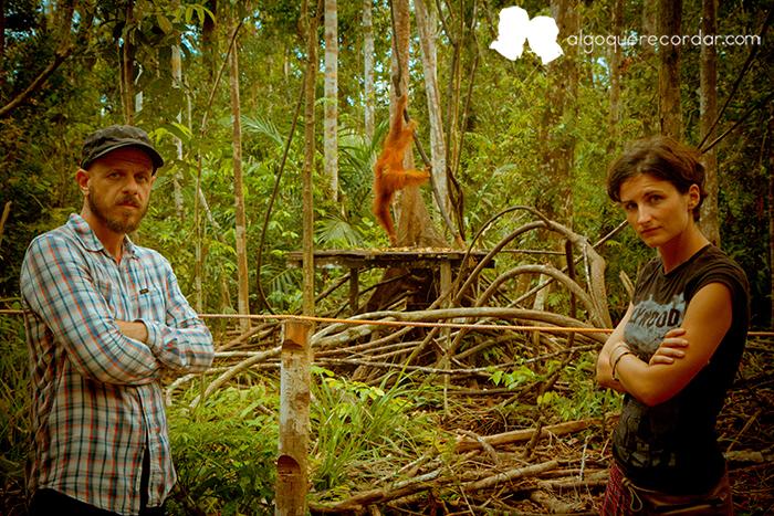 Tanjung_Puting_orangutanes_Indonesia_desafio_algo_que_recordar