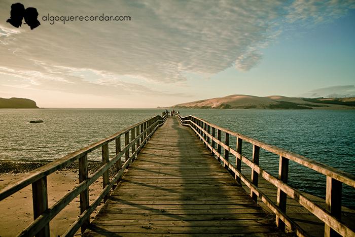 road_trip_Nueva_Zelanda_algo_que_recordar_13