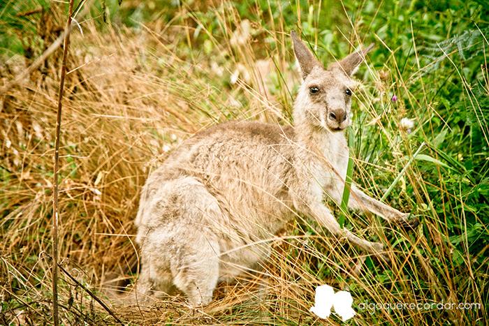 road_trip_australia_algo_que_recordar_04