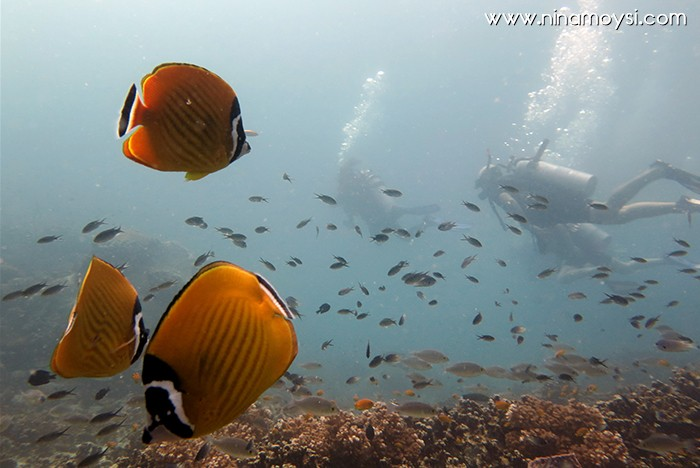 diving_algo_que_recordar_6