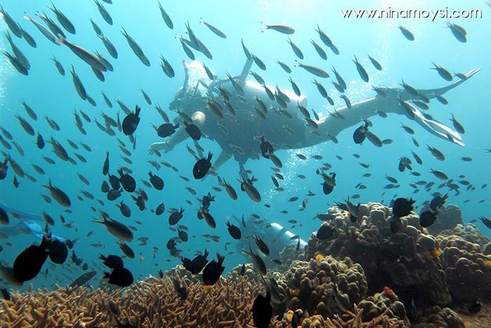diving_algo_que_recordar_7