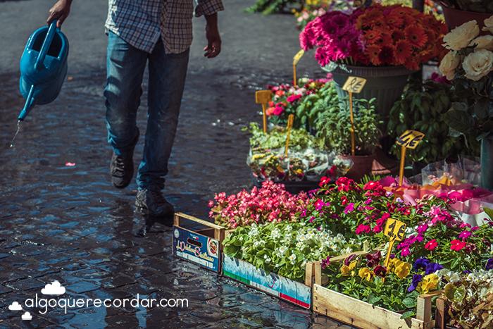 Regando plantas en Roma