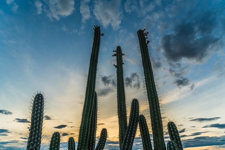Cactus desierto Tatacoa