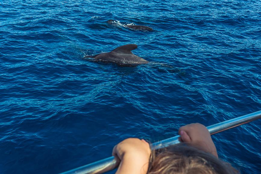 Avistamiento cetáceos La Gomera